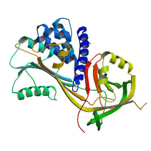 HSP47 Proteins