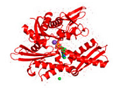 HSP70 Proteins