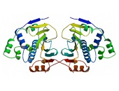 HSP90 Proteins
