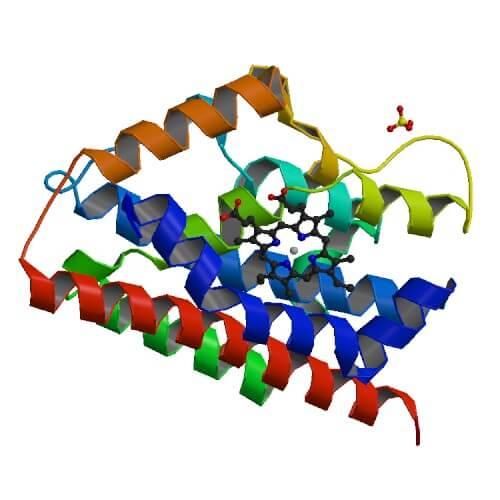 Primary structures of human heme oxygenases